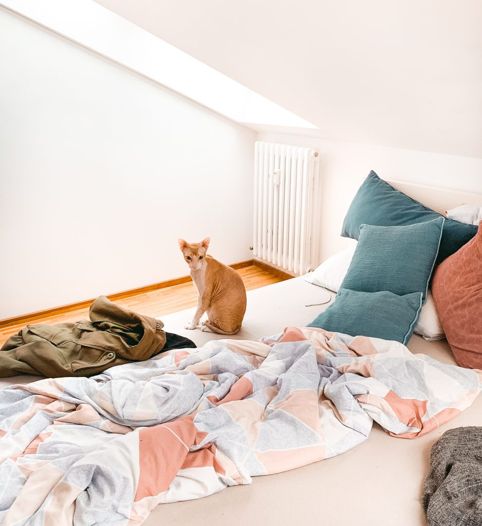Orange-braune Nacktkatze sitzt auf Bett mit pastellfarbenen Bettbezügen - Der 7. Himmel über Berlin