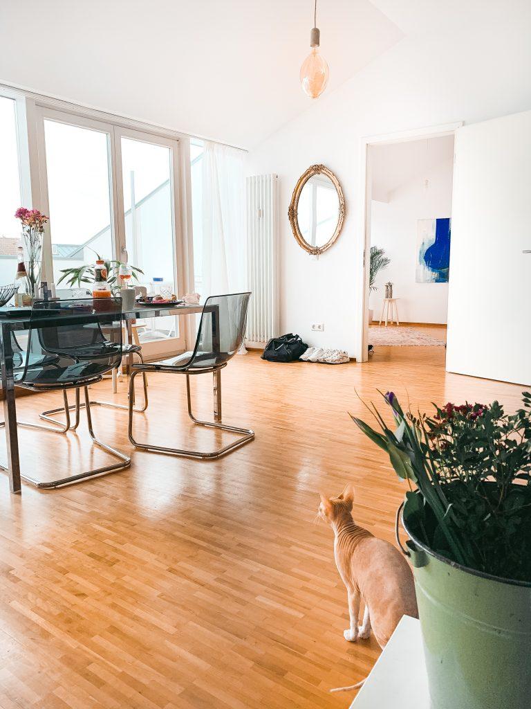 Blick in das Wohnzimmer mit Nacktkatze im Vordergrund und Fensterfront im Hintergrund - Der 7. Himmel über Berlin