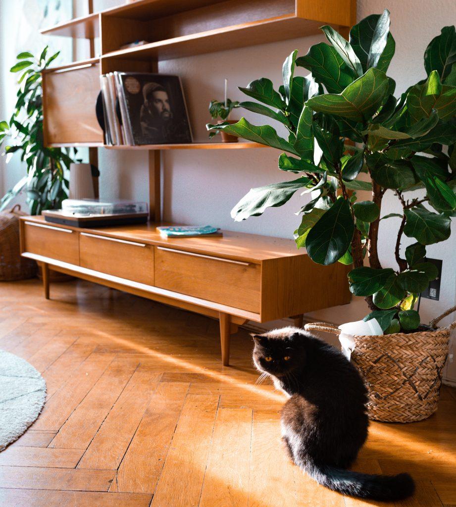 10 ungiftige Pflanzen für deine Katze - Fridlaas Kater Alfie überlebt den Urban Jungle